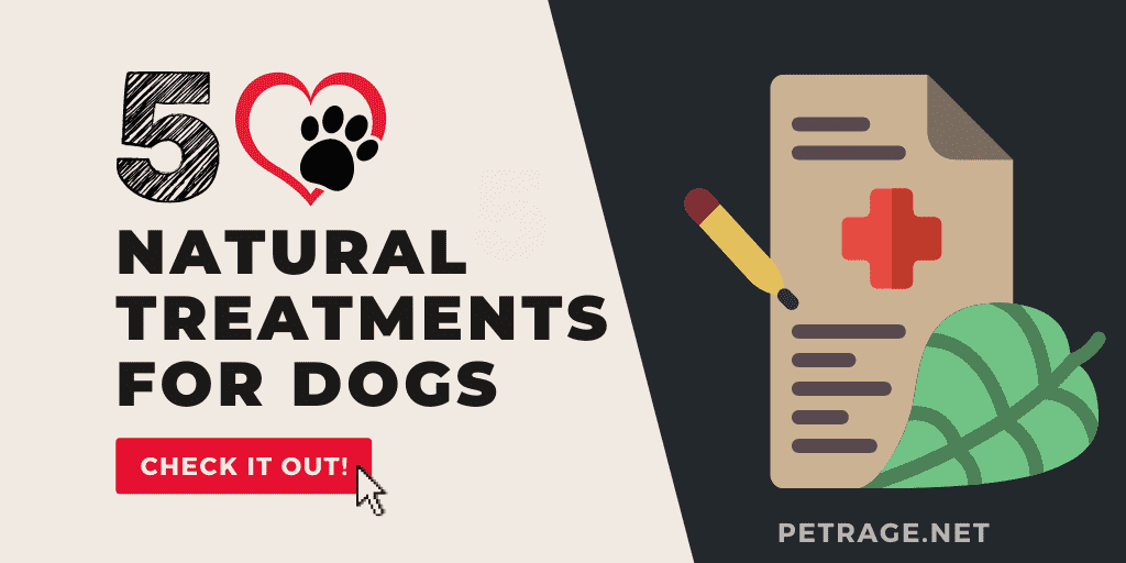 5 natural treaments for dogs petrage