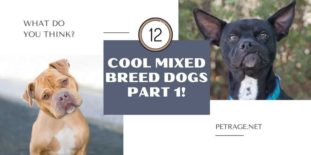 12 cool mixed breed dogs petrage (1)