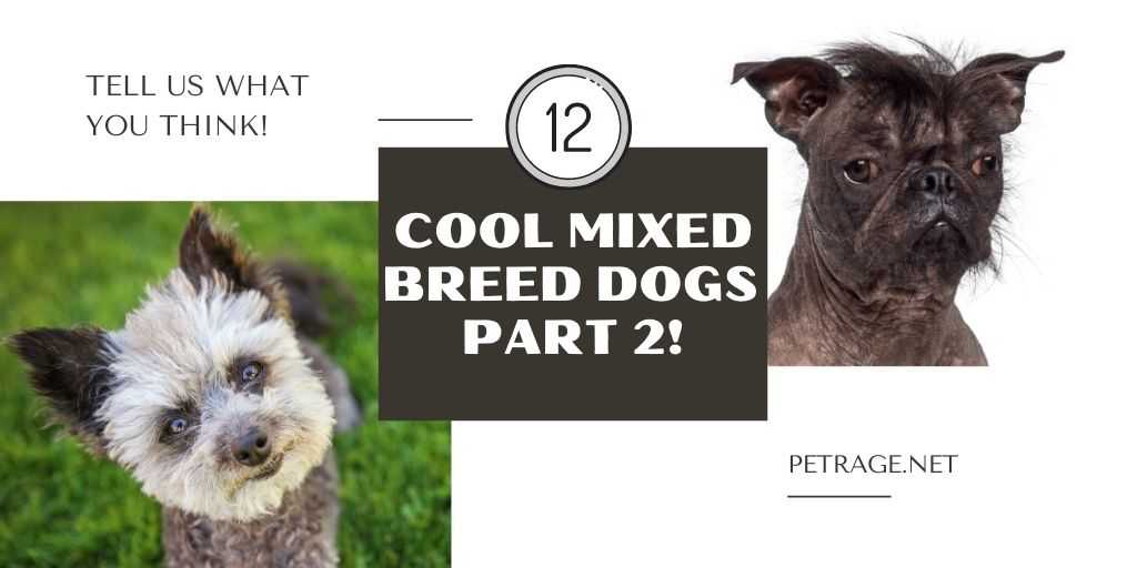 12 cool mixed breed dogs petrage (2)