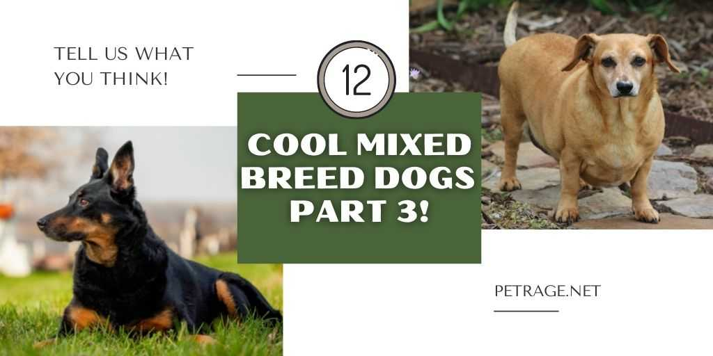 12 cool mixed breed dogs petrage (3)
