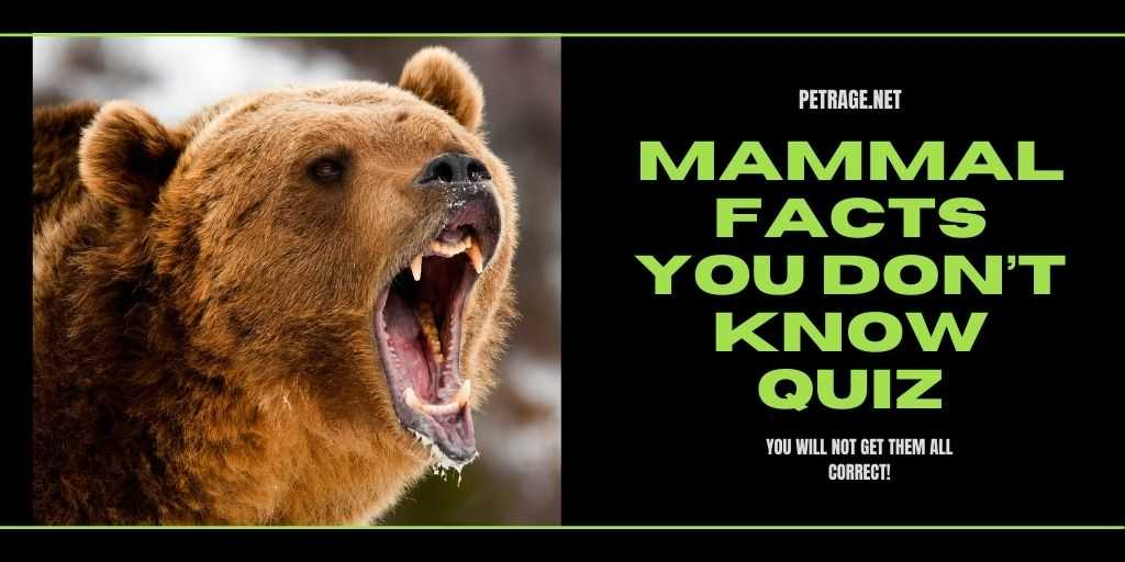 Mammal Facts You Don't Know Quiz petrage