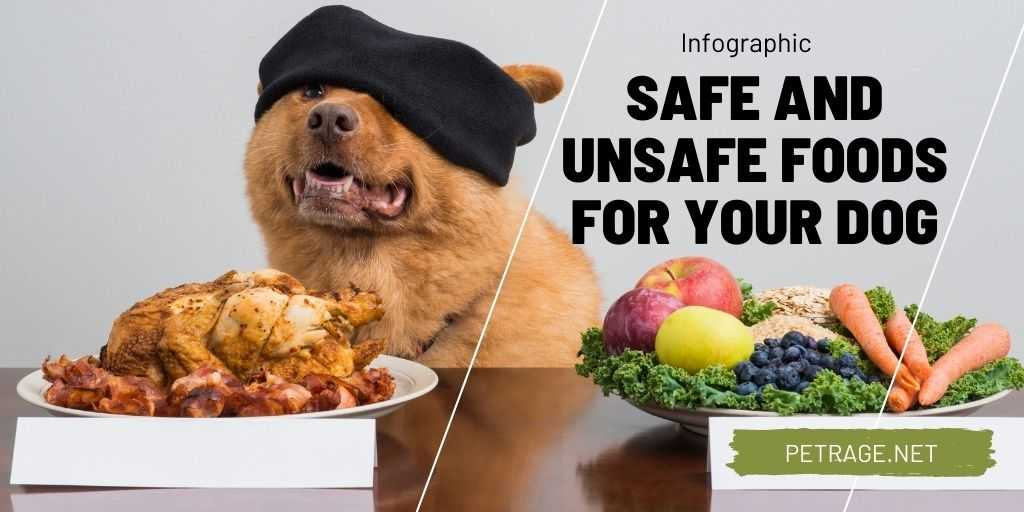 safe and unsafe foods for your dog ingogrraphic petrage