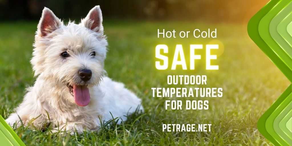 safe outdoor temperatures for dogs petrage