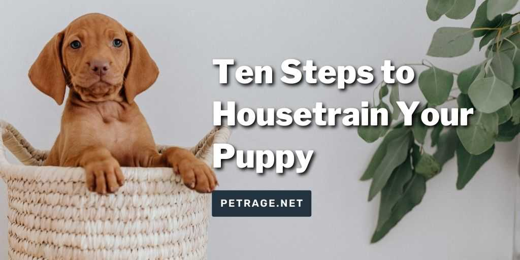 10 steps to house train your puppy petrage