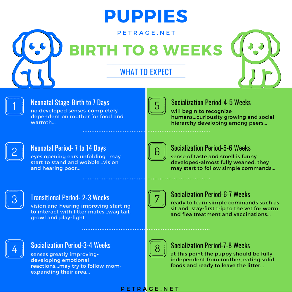 small puppies birth to 8 weeks petrage Infographic