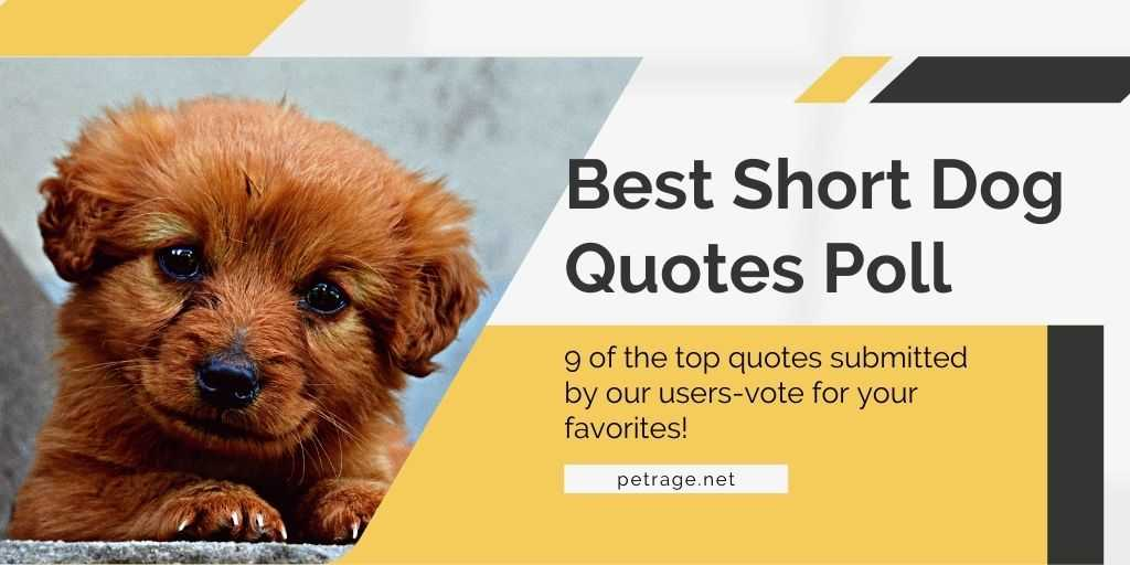 best short dog quotes poll petrage